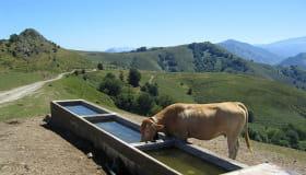 vaches à -bostmendieta