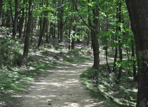 forêt suhalmendi